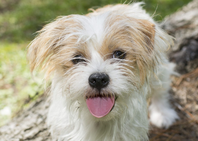Cute facial portrait of a cute furry dog